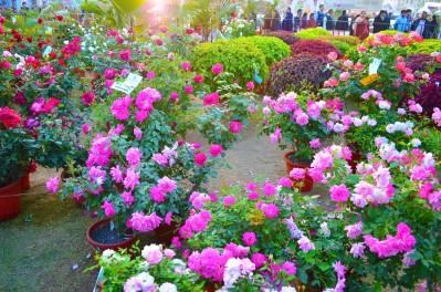 Jamshedpur Flower Show 2017 2